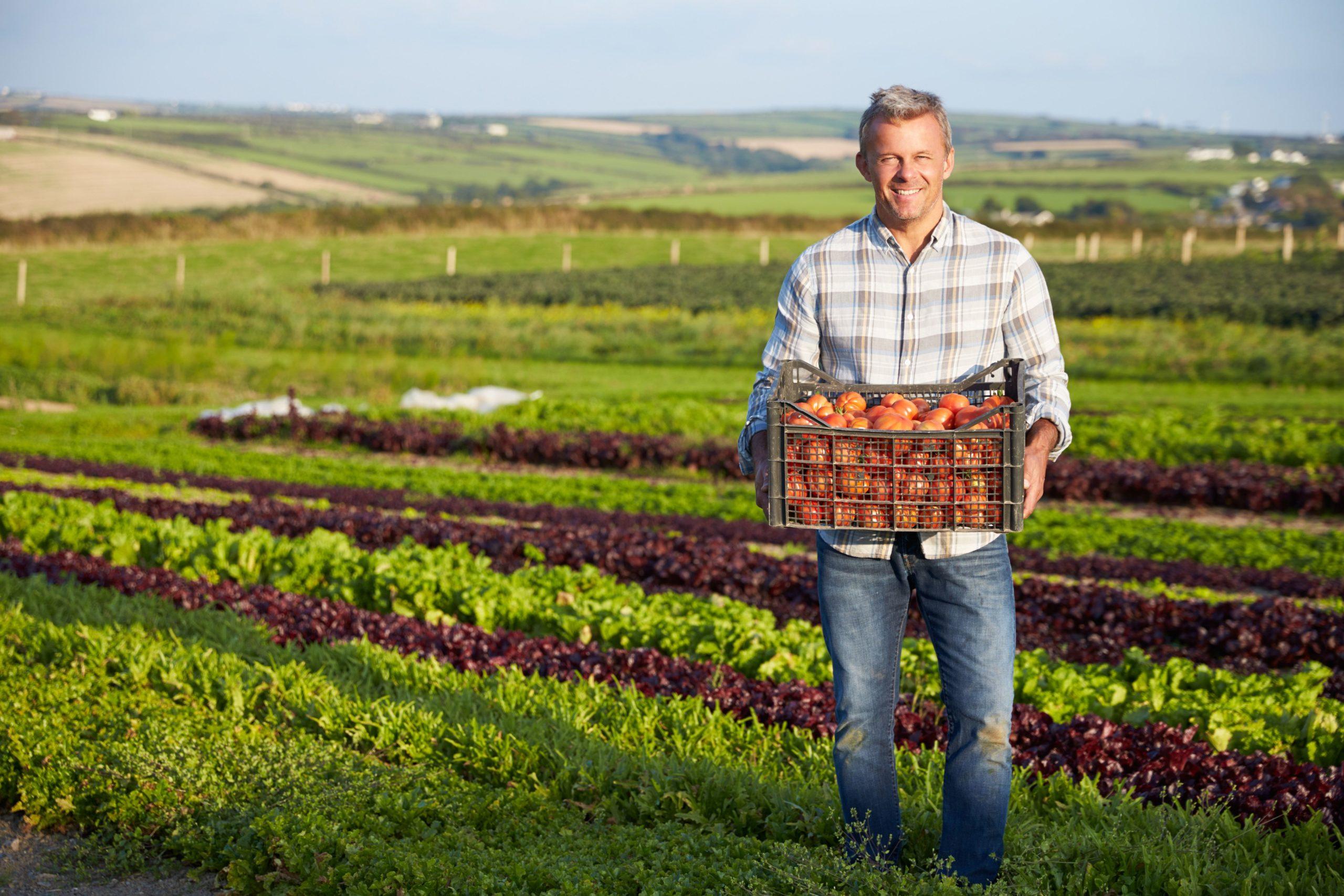 Visuel agriculture